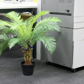 Nervous Plant: Tully Arnot